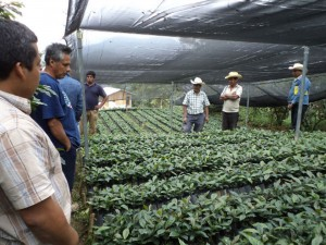 Con-huertos-de-vegetales-y-viveros-de-café,-190-familias-de-Atlahuilco-luchan-por-garantizar-su-situación-alimentaria.-DSC02516-(1)